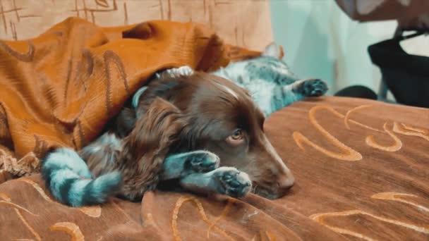 kočka a pes jsou spolu spíme vtipné video. kočka a pes doma přátelství. Domácí zvířata přátelství a láska lifestyle kočka a pes