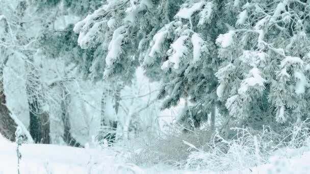 Christmas tree. beautiful winter snowing landscape in the forest. tree christmas movement steadicam. it is snowing a snowstorm Forest in winter covered by snow lifestyle . winter background of snow