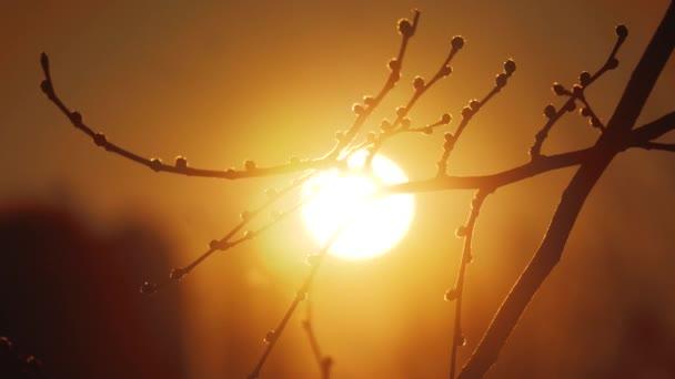 Podzimní suchých větví při západu slunce silueta sluneční světlo krajiny. Podzimní strom jilm velmi mělké zaměření. slunce životní styl ráno a stromu větev makro koncept úsvit krajina