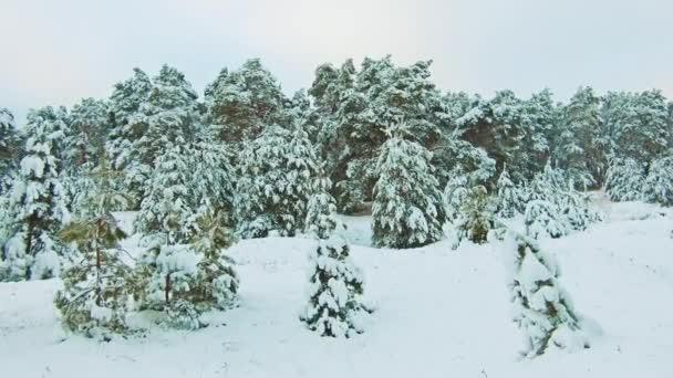 wunderschöne Winterlandschaft mit Sonnenuntergang im Wald. Lifestylebaum Weihnachtsbewegung Steadicam. Wald im Winter mit Schnee bedeckt. Winter Hintergrund der schneebedeckten Tannen in den Bergen