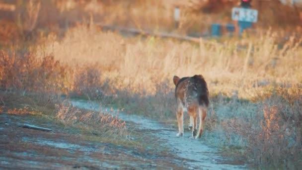 Toulavý pes zimní běží. problém toulavých zvířat. pes uteče pohled zezadu na trávě s životní styl jinovatka