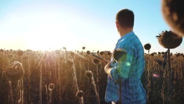 Férfi farmer tabletta napraforgó munkák területén megy életmód talaj sétál a földre. Steadicamnél slow motion videót. agronómus betakarítás napraforgó termés tanul. intelligens gazdálkodási koncepció farmer