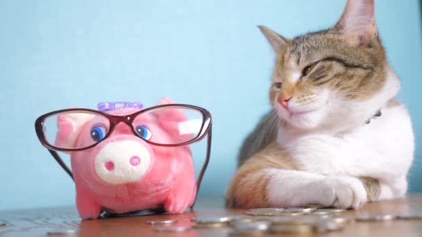 Sparschwein und Katze Teamwork lustige Video-Geld-Konzept finanzieren betriebswirtschaftliche Buchhaltung. Geld Katze Buchhalter Finanzier Haustier häufen wachsende Geld und Sparschwein. Hand legt Münzen in ein Sparschwein. Bankenrettung
