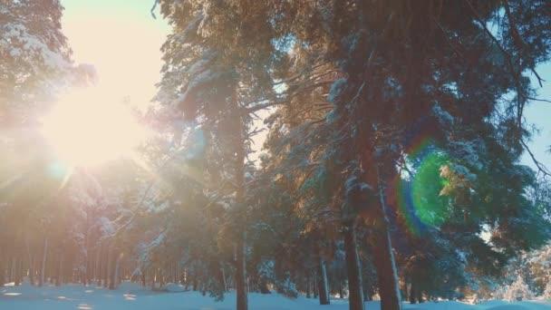 fantastische Winterlandschaft bei Sonnenuntergang. Winterkiefer im Sonnenwald im Schnee Sonnenlicht Bewegung. gefrorener Frost Weihnachtsbaum Neujahr. Konzept neuen Lebensstil Jahr Winter. Zeitlupenvideo. Kiefer