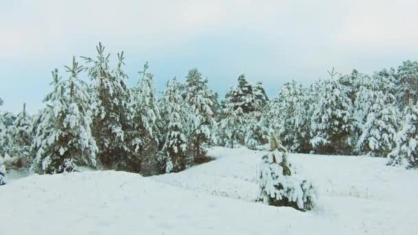 wunderschöne Winterlandschaft mit Sonnenuntergang im Wald. Baum Weihnachten Bewegung Lifestyle Steadicam. Wald im Winter mit Schnee bedeckt. Winter Hintergrund der schneebedeckten Tannen in den Bergen