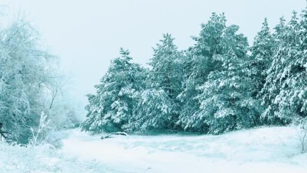 Weihnachtsbaum. Schneelandschaft im Winter im Wald. Baumweihnacht-Bewegung Steadicam. es schneit ein Schneesturm Wald im Winter von Schnee bedeckt. Winter Hintergrund von Schnee bedeckt