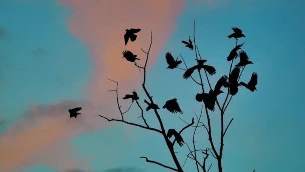Flock ősszel madarak varjak kék ég vesz le a fáról. a nyáj varjak fekete életmód madár száraz fa. madarak hollók az égen. a nyáj varjak koncepció