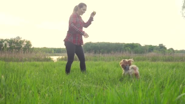 girl playing with a dog on lifestyle the nature at sunset. dog yorkshire terrier playing catches with a ball in nature slow motion video. pet home concept