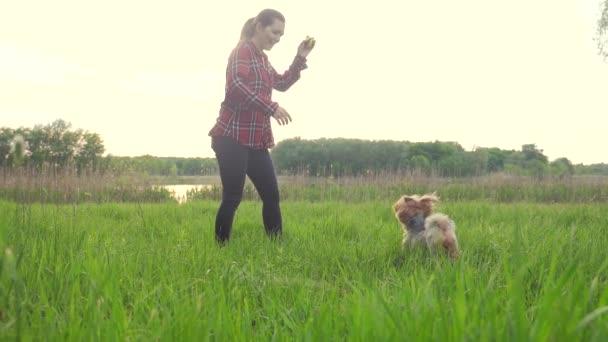 holku, která si hraje se psem o životním stylu, o přírodě při západu slunce. Psí čokej si hraje s míčkem v přírodě pomalými filmy. koncept domácího domova