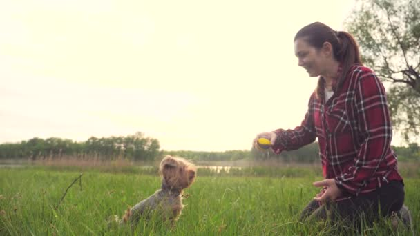 girl playing with a dog on the nature at sunset. dog yorkshire terrier playing catches with a ball in nature slow motion video. lifestyle pet home concept
