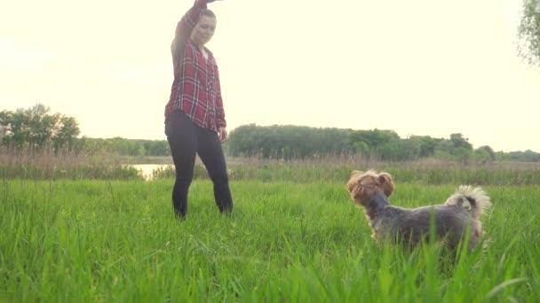 dívku, která si zahrává se psem v přírodním životním stylu při západu slunce. Psí čokej si hraje s míčkem v přírodě pomalými filmy. koncept domácího domova