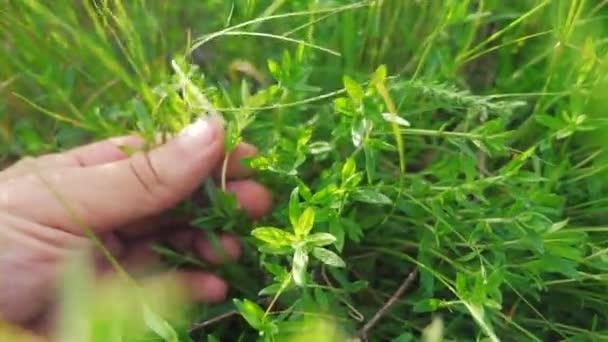 Gardening man gardener in the garden tearing grass sun green. man hand touches the grass lifestyle in the field