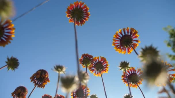 Blossom flowers orange flowers against the blue sky nature lifestyle view from below