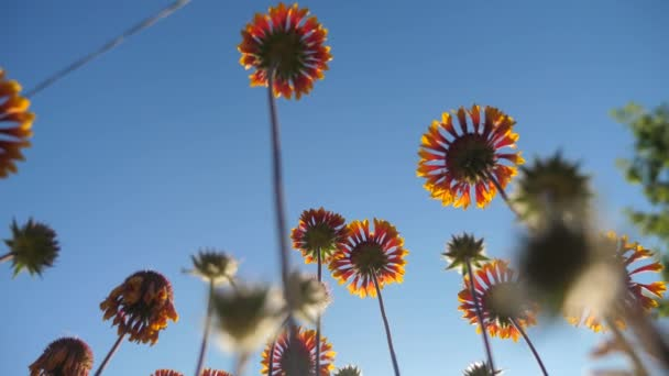 Blossom flowers orange flowers against the blue sky nature view from below lifestyle
