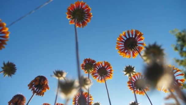 Blossom flowers orange flowers against the blue sky nature view lifestyle from below