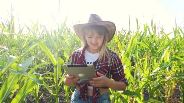 Inteligentní farmářství s pomalým pohybem videa. dívčí agronomka obsahuje počítač dotykové podložky tabletu v kukuřičném poli studuje a zkoumá plodiny před sklizní životního stylu. Žena a Agribusiness koncept