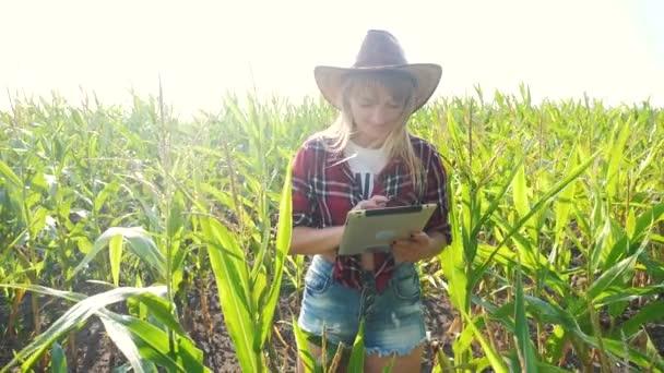 Inteligentní farmářství s pomalým pohybem videa. pro dívčí agronomy je v kukuřičném poli počítač s tabletovým životním stylem, studuje a zkoumá plodiny před sklizní. Žena a Agribusiness koncept