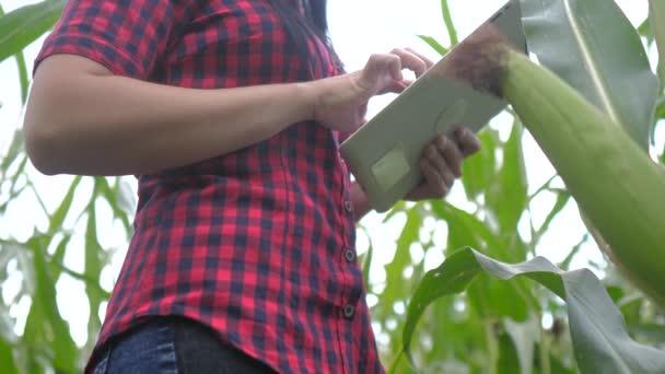 okos öko mezőgazdasági gazdálkodási koncepció. farmer lány egy növénykutató használja és érintse tabletta ellenőrzése közben kukorica a gazdaságban. nő, digitális tabletta működik a terepi életmód
