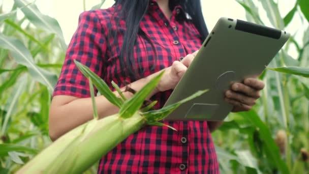 chytré ekologické zemědělství koncept .lifestyle farmář dívka rostlina výzkumník používá a dotknout tablet při kontrole kukuřice na farmě. žena s digitálním tabletem pracuje v terénu