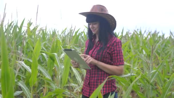 inteligentní ekologické zemědělství zemědělství životní styl koncepce. zemědělec dívka rostlina výzkumník používá a dotknout tablet při kontrole kukuřice na farmě. žena s digitálním tabletem pracuje v terénu