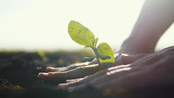 Mezőgazdaság öko-gazdálkodás. Világ talaj egy nap életmód koncepció: férfi farmer kezek növény hajtás zöld levelek mag fa talaj elmosódott mezőgazdasági területen háttér. férfi farmer dolgozik a területen