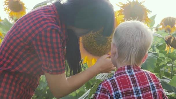 boldog család mezőgazdaság koncepció Anyák napja lassított videó. anya és fia gazdálkodók tanulmányozza napraforgó életmód egy területen vicces videó.boldog család anya lány és fia fiú munka a területen