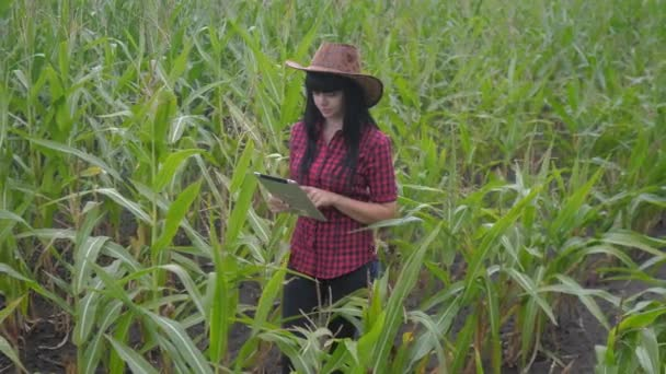 smart eco agriculture farming concept . farmer girl plant researcher a uses and touch tablet while checking corn on the farm . lifestyle woman with digital tablet works in the field