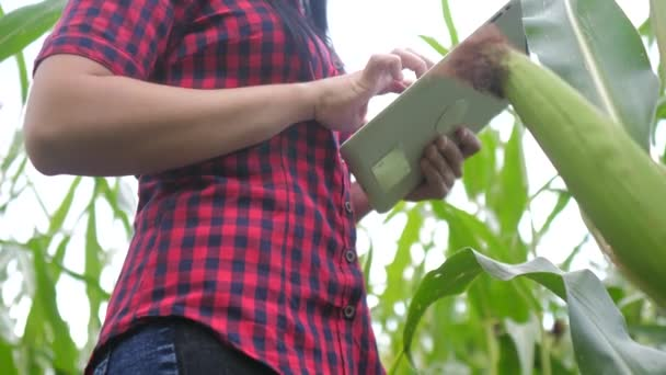 smart eco agriculture farming concept . farmer girl plant researcher a uses and touch tablet while checking corn on the farm . woman with digital tablet works in the lifestyle field