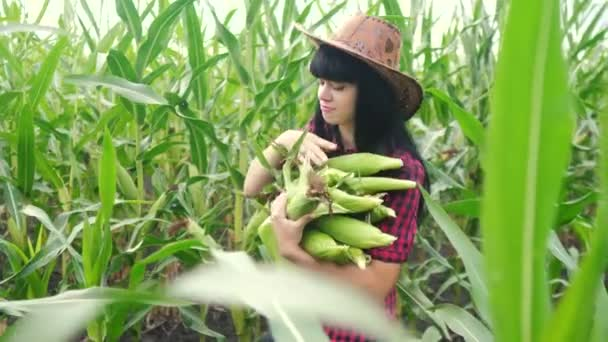 smart eco harvesting agriculture farming concept . farmer girl plant researcher harvesting corn cobs on the lifestyle farm . woman a with digital tablet works in the field