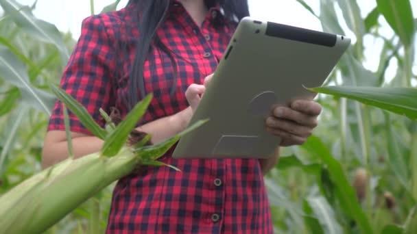 intelligens öko-mezőgazdasági gazdálkodási koncepció. farmer lány egy növény kutató életmód használ, és érintse tabletta, miközben ellenőrzi a kukorica a gazdaságban. nő digitális tabletta működik a területen