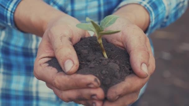 Farmářská ruka drží čerstvou mladou rostlinu slunečnici. muž ruce drží hlínu zelenou mladou rostlinu. ekozemědělství Symbol jarní a ekologické koncepce nového života a ochrany životního prostředí. samec