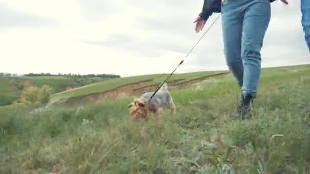 Šťastná rodina. pes Yorkshire teriér kráčí na vodítku první osoba pohled na ruku. pár drží za ruce venčení psa týmové práce. životní styl koncept pet přítel muž