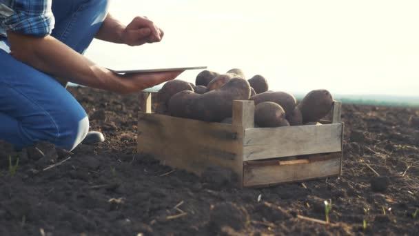 chytré zemědělství. Muž zemědělec, který sklízí brambory na digitální tabletě, je považován za plodinu na poli s půdou. zemědělský koncept technologie budoucí sklizně. samec používající aplikace a internet, selektivní