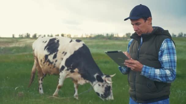 zemědělství. chytrá zemědělská technologie. farmář mlékař s digitální tabletou zkoumá množství mléka vyprodukovaného krávou skvrnitou v životním stylu. farmář pracuje vedle krávy na mléčné farmě