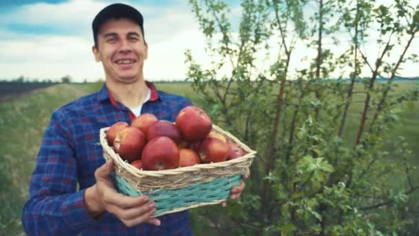 farmář rudý muž krk sbírá jablka v košíku sklizeň na zahradě. zemědělská obchodní koncepce. chytrá zemědělská sklizeň. farmář drží životní styl koš s jablky ukazuje sklizeň