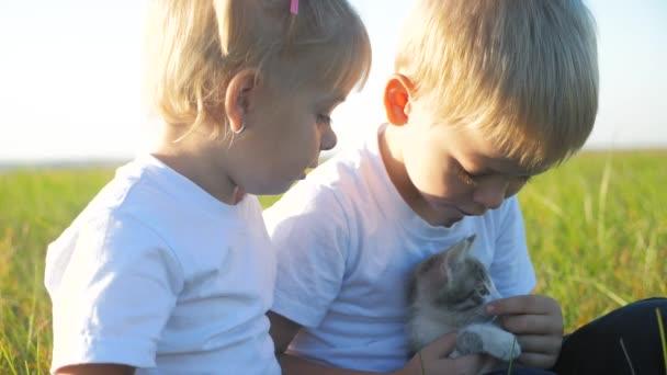 malé děti a kočka koncept šťastná rodina zpomalení videa. děti bratr a sestra držet hrát s malým koťátkem na přírodním západu slunce léto v parku. malý životní styl chlapec a dívka jsou