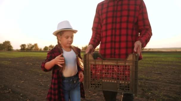 zemědělství. dva farmáři šťastní rodinní tátové týmová práce a dcera nosí krabice rajčat. zemědělství a zemědělský podnik sklízející ekologický koncept. dva farmáři otec a dcera sklízejí rajčata