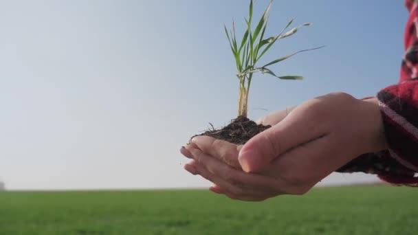 dívčí ruce drží hlínu zelenou mladou rostlinu. ekozemědělství Symbol koncepce jara a ekologie. žena rolnické ruce drží zelenou mladou rostlinu a zemitou hrst v ranním slunci paprsky životní styl