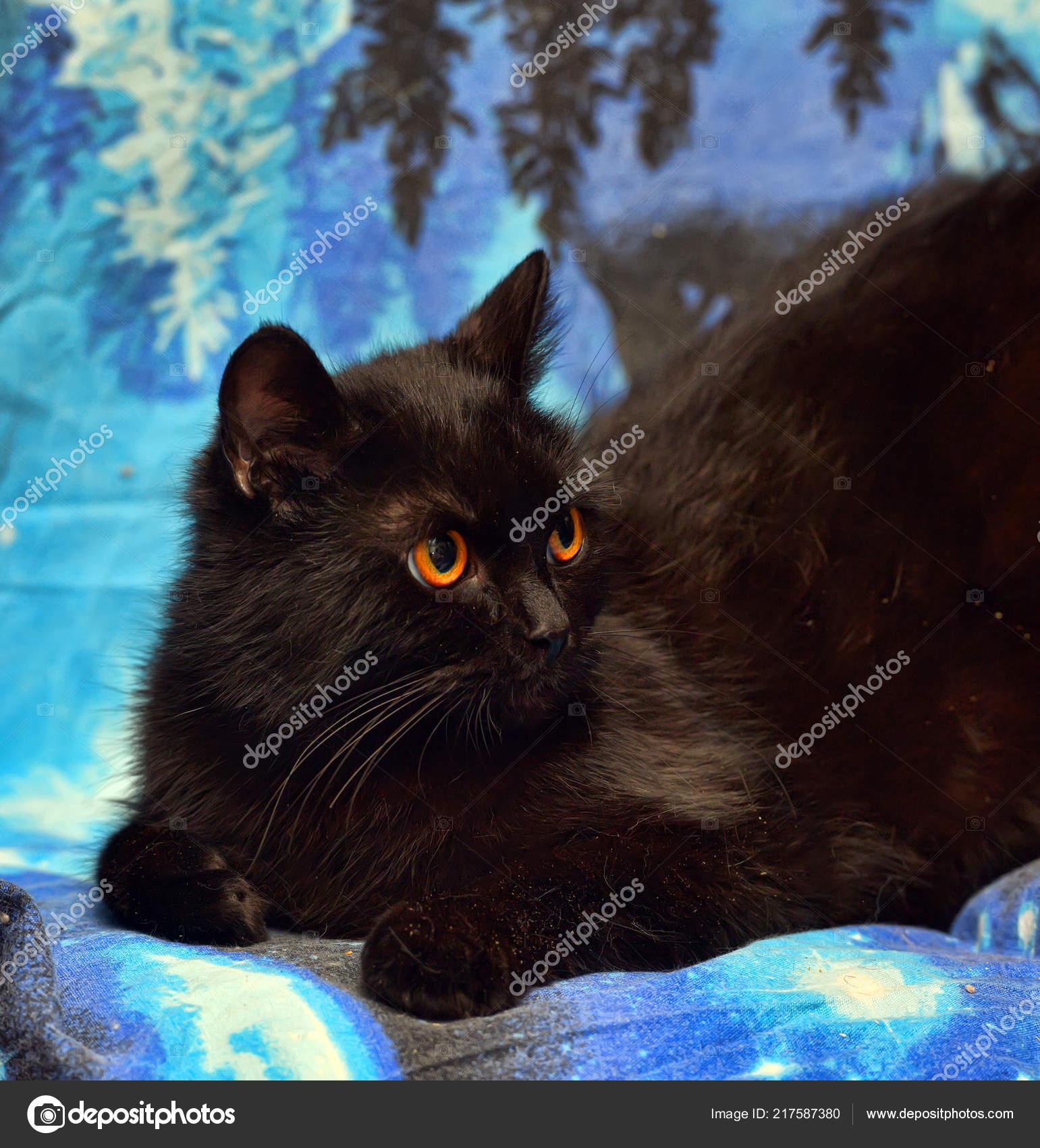 www chlupatá černá kočička