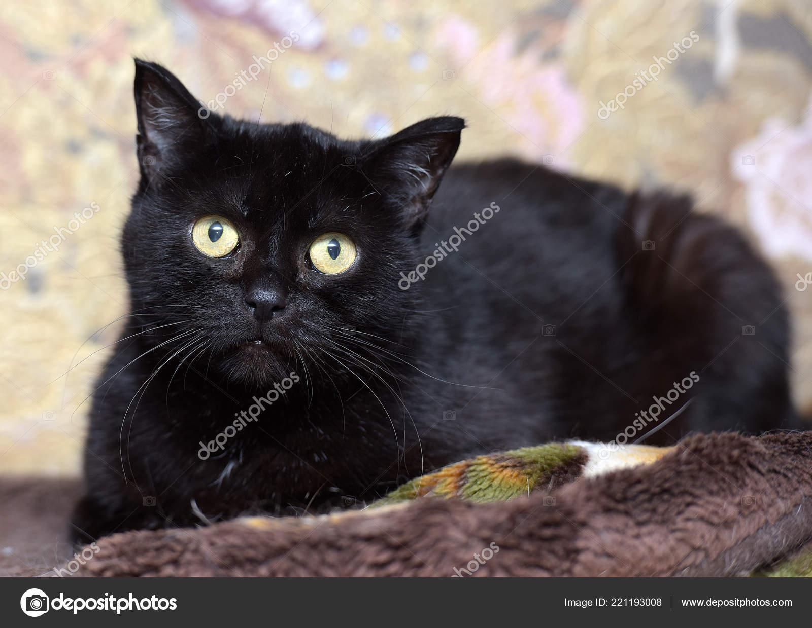 Tlustá černá kočička jíst