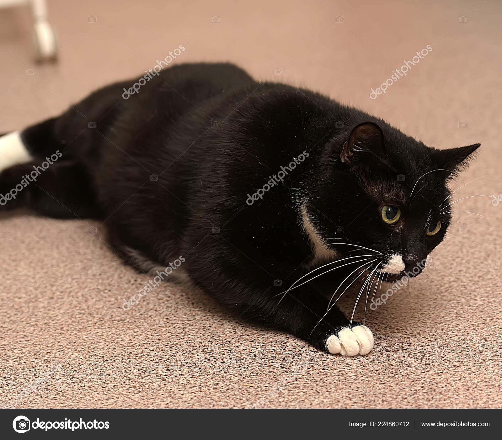 Pouze tlustá černá kočička