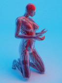 Grafické znázornění lidského krevního systému.., 3d vykreslení