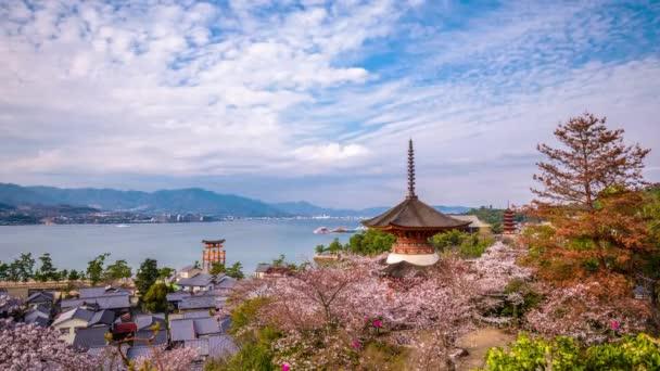 Miyajima, Japan time lapse with cherry blossoms.