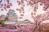 Himeji, Japonsko na hradě Himedži v sezóně jaro třešňový květ.