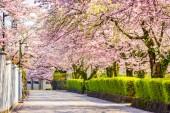 Šizuoka, Japonsko Staré město streetts na jaře v jarní sezóně.
