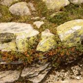 Fotografie skalní útvar a zelené trávy
