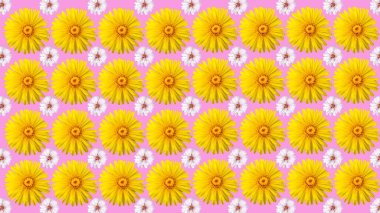 seamless background of flowers isolated on pink, horizontal arrangement