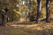 Esik. Őszi Park. Őszi fák és a levelek a nap sugarai. vöröshajú nő jó szórakozást az őszi erdőben