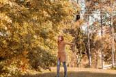 Őszi szépség - Őszi színek egy erdőben