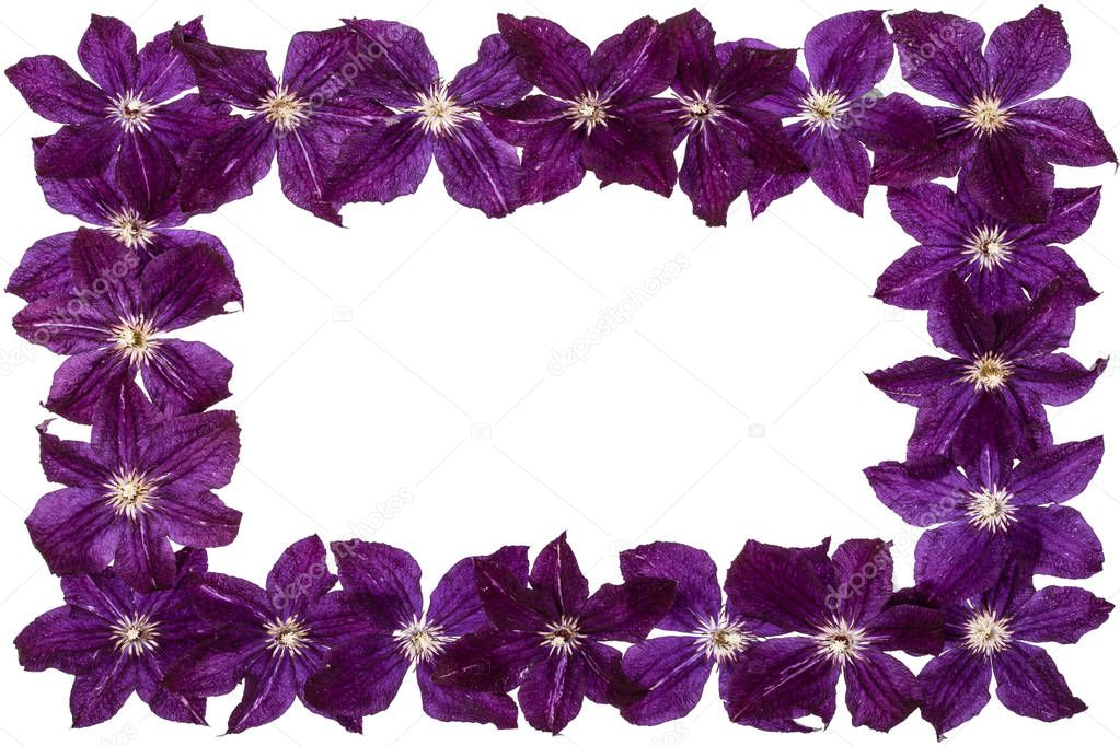 Rectangular frame from  the flowers of clematis, isolated on white background